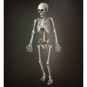 Αποκριάτικος Διακοσμητικός Σκελετός 120cm
